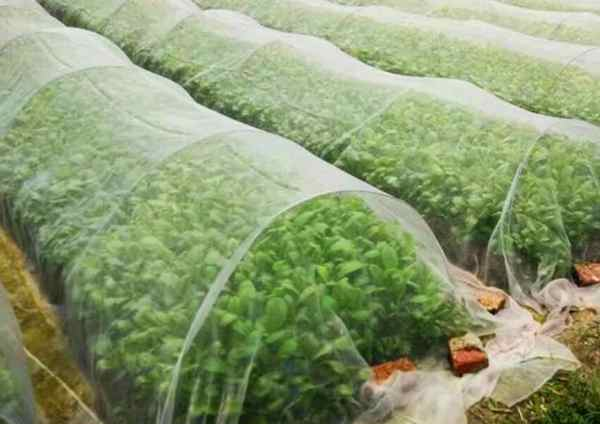 Insect & Mosquito Protection Net