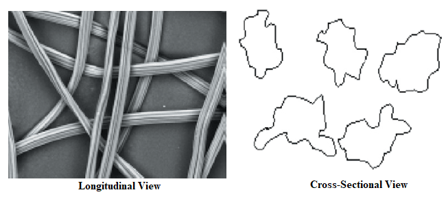 Longitudinal and cross sectional View of viscose